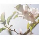 fleur lys.jpg