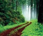 étapes du deuil,elisabeth kübler-ross,déni,choc,acceptation,colère,dépression,accueillir ses émotions